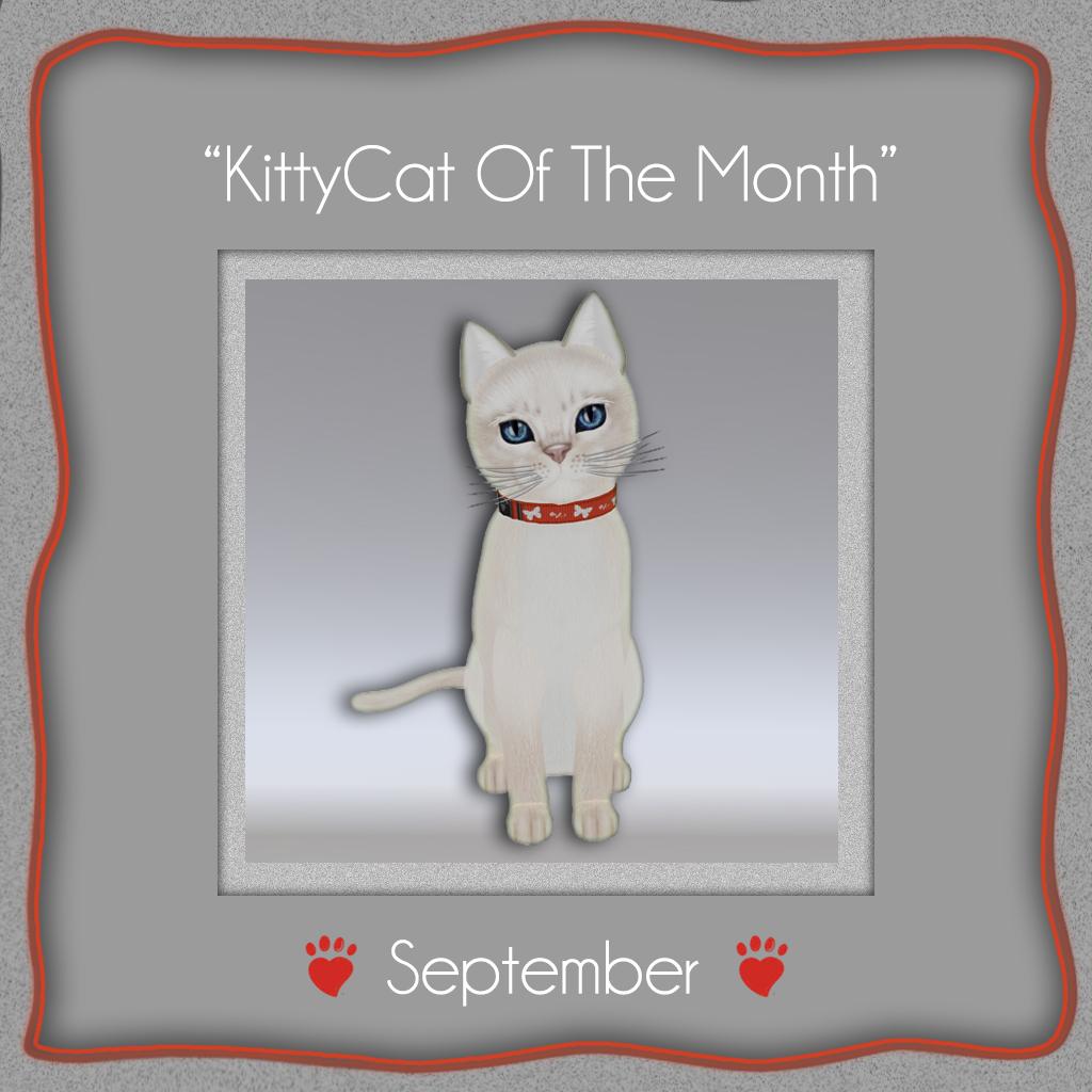 august 2013 � kittycats news