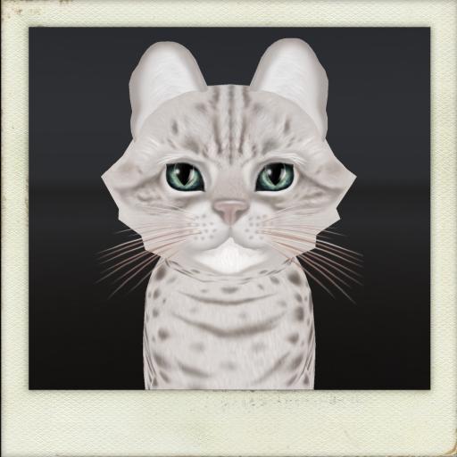 [Image: KittyCatS-Floofy-Head.png]